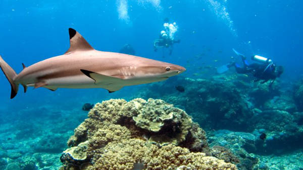 pigeon-island-blacktip-reef-shark